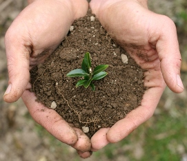 seedling on hands
